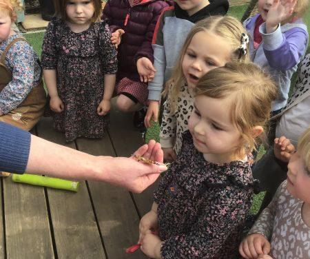 Caterpillars and Butterflies!